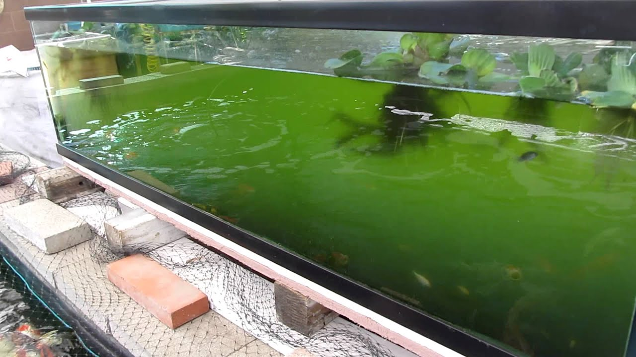 225 gallon koi fish tank youtube for Coy fish tank