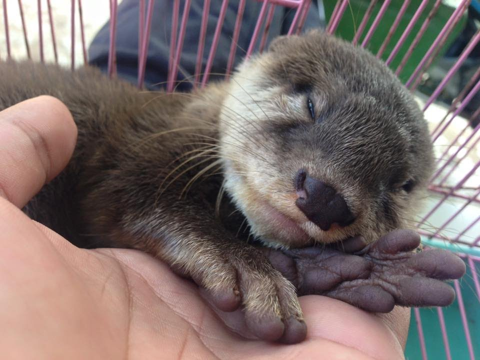 otter cute video cute baby otter sleeping youtube