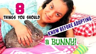 8 things you should know before adopting a bunny