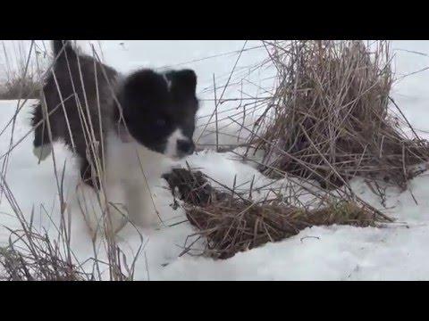 Обучающее Видео по дрессировке собак Команда Азарт