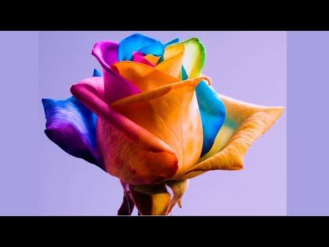 Это нереально круто или нет  ☑ проверка лайфхака 🌹разноцветная радужная роза