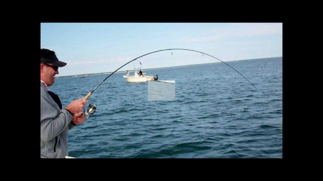 Pound martha 39 s vineyard bonito youtube for Martha s vineyard fishing charters