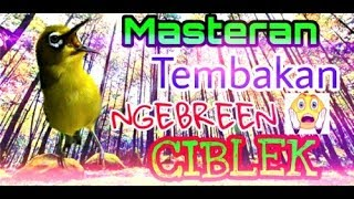 Download Lagu pleci nembak ngebren ciblek mp3