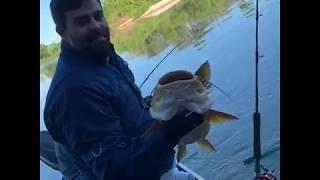 Engenheiro Ambiental também pesca e solta