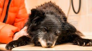 Пожилую травмированную собаку предали хозяева | elderly dog abandoned by owners