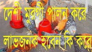 Desi Murgi Farming In Bangladesh,