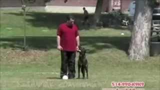 Montreal's Worst Dog