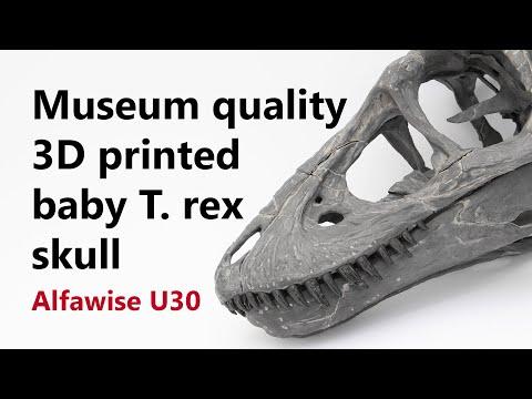 Museum quality baby T. rex skull 3D printed on Alfawise U30