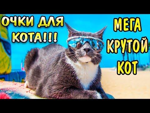 Товары для животных с Aliexpress - Очки для кота !!!