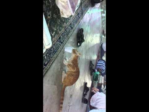 قط يشرب زمزم  Cat in Makkah