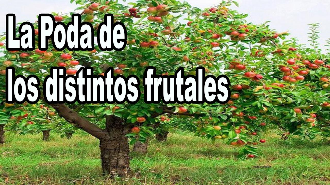 la poda de los frutales de hoja perenne y hoja caduca