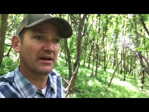 Off Grid Living: Which Tree's to Cut Which Trees To Keep. (Clearing Land)