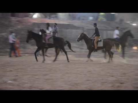 riding school,  ss club gujarat india,  saddle & stable club, horse stabling,  safari gujarat,