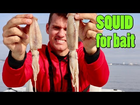 Using Only Squid For Bait To Catch Fish