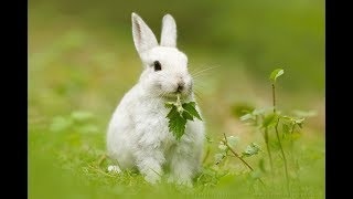 Rabbit - A Funny And Cute Bunny Videos Compilation    Cute baby animals Videos