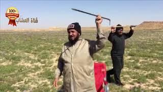 الخزامى و النفل و البابونج و البنفسج في أرض الطيبين منطقة الجوف السعودية