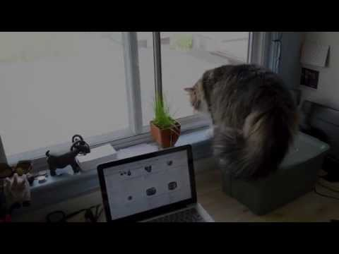 Window cat attack