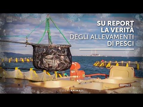 Su Report la verità sugli allevamenti di pesci - indagine con Essere Animali