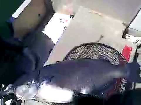 South Platte River Catfish from YouTube · High Definition · Duration:  7 minutes 2 seconds  · 2,000+ views · uploaded on 11/8/2015 · uploaded by Ivan Gazalkent