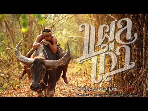 แผลเก่า โดย ม.ล.พันธุ์เทวนพ เทวกุล - ตัวอย่างภาพยนตร์เต็ม (Official Trailer {HD})