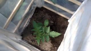 Как сделать небольшой парник(Как самостоятельно сделать небольшой парник. Как просто из отходов самому сделать мини парник для садовых..., 2015-03-18T10:22:24.000Z)