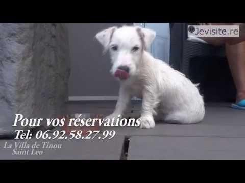 chambres-d'hÔtes-la-villa-de-tinou-a-saint-leu,-ile-de-la-reunion