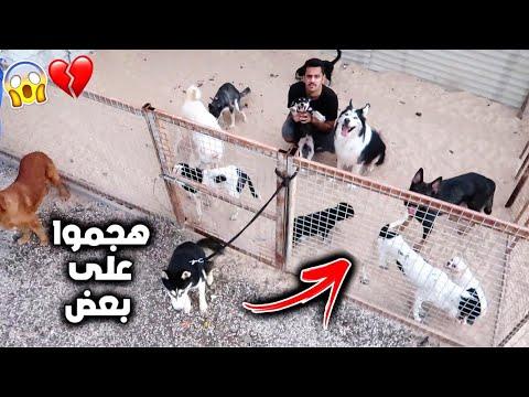ايش يصير لو حبست نفسي مع 20 كلب يوم كامل !! ماتوقعت