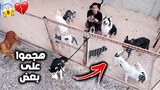 What Happens If i locked Myself With 20 Dogs for a Whole Day!!