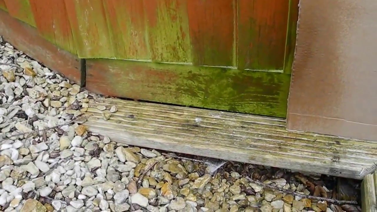 Anti Moss Green Algae Removal And Woodworm Killer From