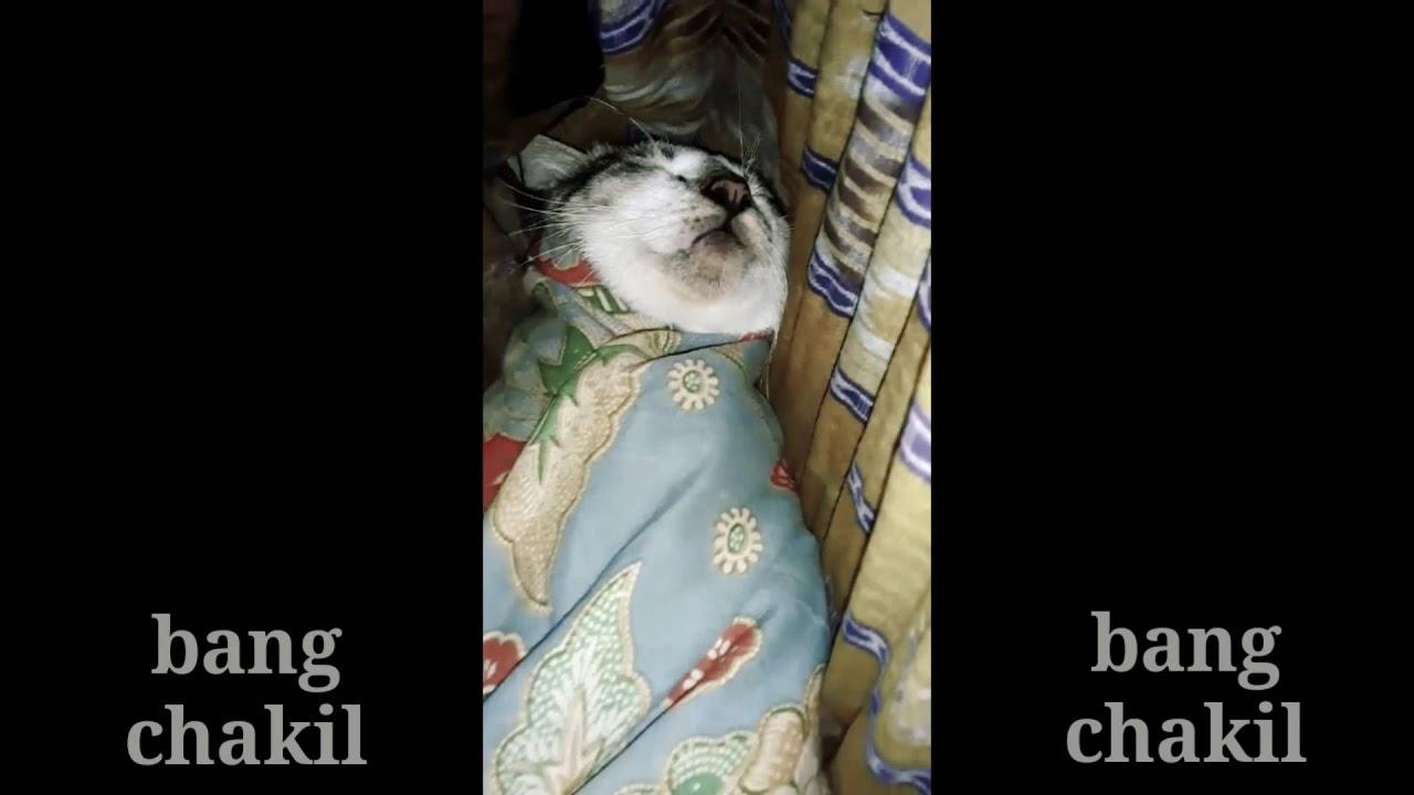 Gambar Kucing Viral Di Tiktok godean.web.id