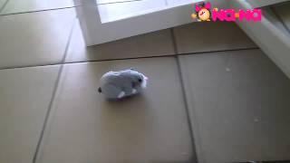 Видеообзор Интерактивная игрушка хомяк Обжора (Жу-жу Петс)