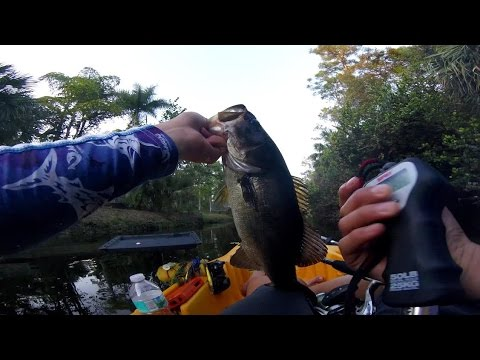 Fishing The Upper Loxahatchee River For TOADS