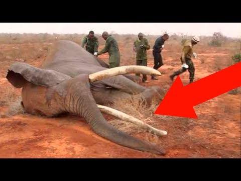 Этот Слон Заплакал, Когда Его Освободили Через 50 Лет Заточения