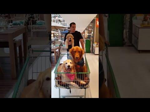 Josh Nagy - Cuteness Overload: These Dogs Go Shopping