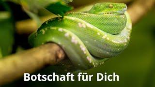 FEUERFEE SEELENORAKEL BOTSCHAFT FÜR D CH