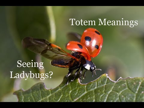The Meaning Of Seeing Ladybugs Animal Totems Youtube