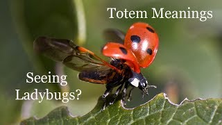 The Meaning of Seeing Ladybugs: Animal Totems