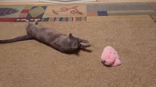 Русский голубой кот и заяц 👯