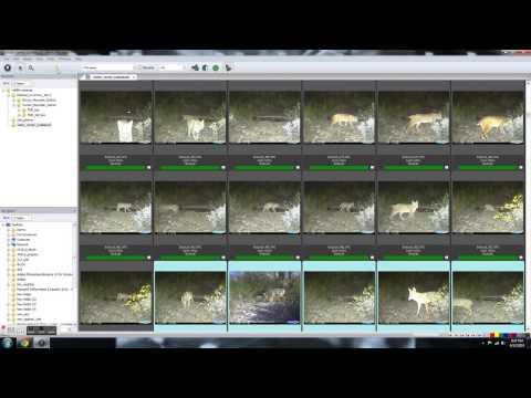 Wildlife Camera Database (part 2 - data entry)