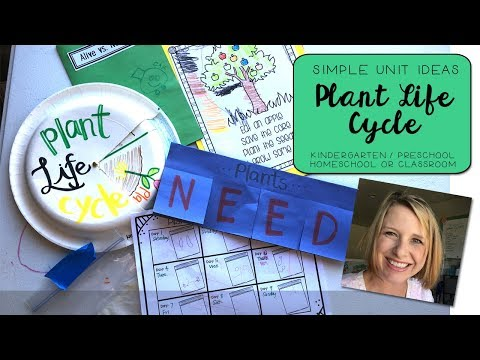 Plant Life Cycle || Lesson Ideas