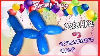 Мастер-класс Как сделать СОБАЧКУ из воздушных шаров? Развивающее видео для детей