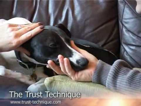 The Trust Technique With Bodie The Dog