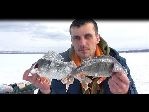 рыбалка на Берёзовском  водохранилище,крупный окунь и плотва