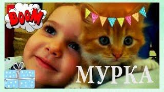 Кошка Мурка мистер МАКСА и мисс КЕЙТИ в гостях у Лёвиной маленькой собачки. Большой воздушный шарик