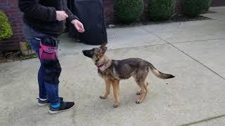 Jinx puppy pre school 2