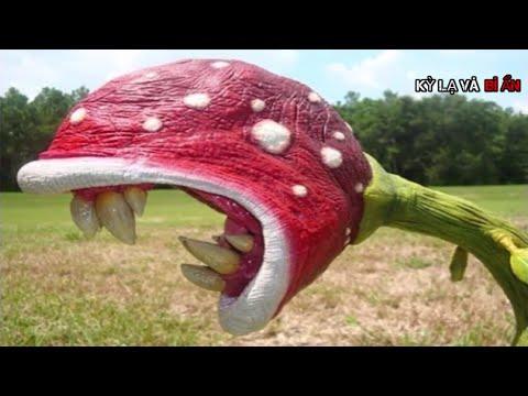 Top 10 loài hoa ăn thịt khủng khiếp và đáng sợ nhất Thế Giới bạn sẽ không tin chúng đang tồn tại