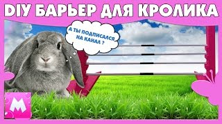 DIY БАРЬЕР для КРОЛИКА и соревнований по кроличьим прыжкам своими руками Дрессировка кролика
