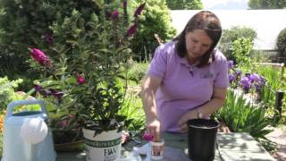 How to Propagate a Butterfly Bush : Grow Guru