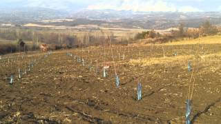 Plantaza trwsanja(2)
