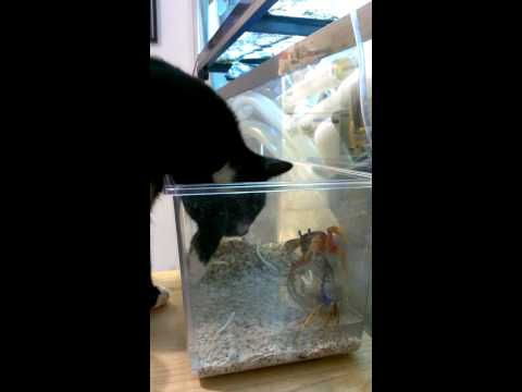 Cat vs Crabs